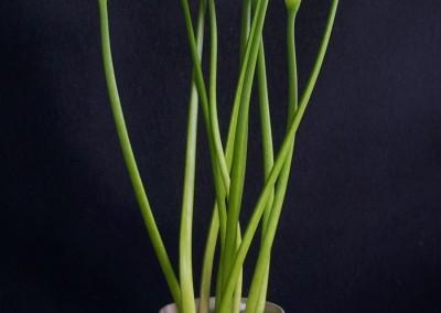 florales004