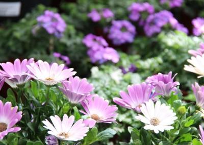 zierpflanzen010