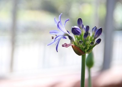 zierpflanzen011