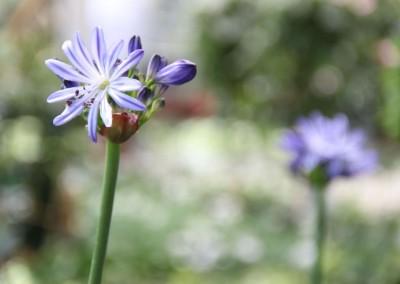 zierpflanzen013
