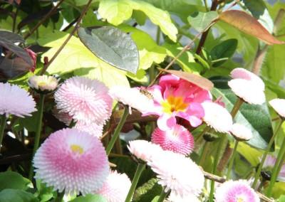 zierpflanzen017