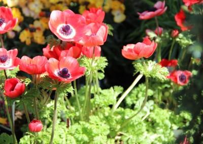 zierpflanzen018
